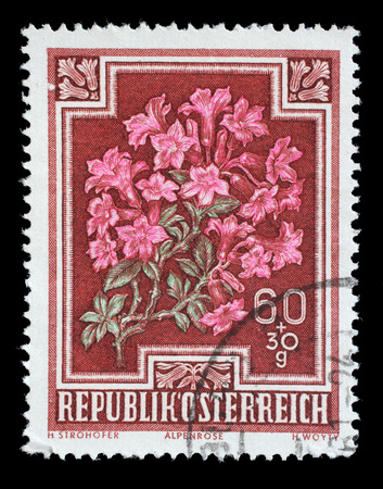 alpen: Stamp printed by Austria, shows Alpen Rose (Rhododendron hirsutum), circa 1948 Editorial
