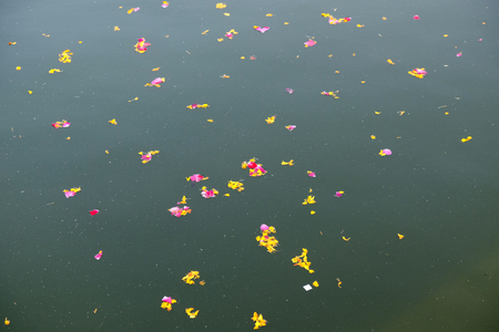 Colourful floral offerings, petals, flowers and garlands, floating in Pushkar Lake, Rajasthan, India Imagens