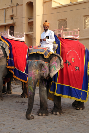 Decorated elephants waiting tourists at Amber Fort in Jaipur, Rajasthan, India, on February 16, 2016.