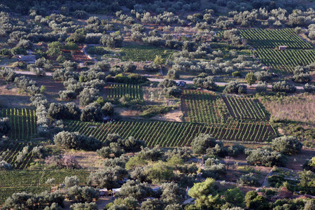 Vineyards at Smokvica village. This place is famous for the quality of the Posip and Rukatac wine , island of Korcula, Croatia