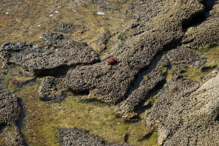 Stone texture under water 版權商用圖片