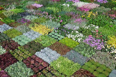 Flowers exposed on Floraart, 52 international garden exhibition on lake Bundek in Zagreb 免版税图像