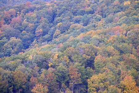 The forest in autumn colors