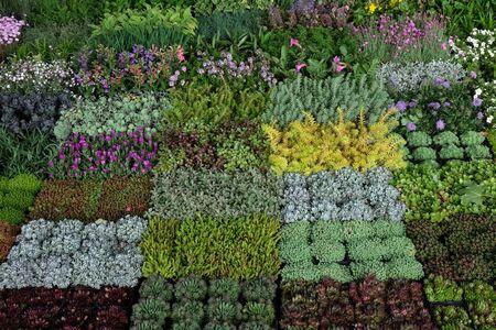Flowers exposed on Floraart, 52 international garden exhibition on lake Bundek in Zagreb Фото со стока