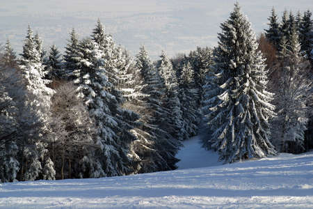 Winter landscape trees under snow on the mountain Pohorje, Slovenia