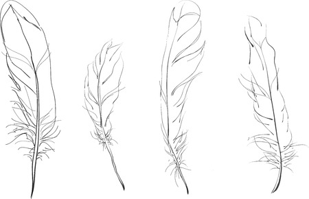 panache: Black and white sketch of a feather 4 Illustration