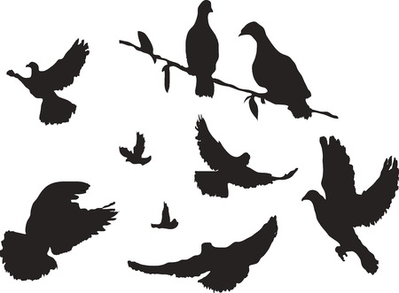 pigeons: many pigeons silhouettes from different angles - the pigeons sit, fly, communicate, fly. Can be used in Biblical topics Illustration