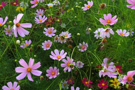 massif de fleurs: Fleurs aux couleurs vives de l'�t� sur un beau parterre Banque d'images