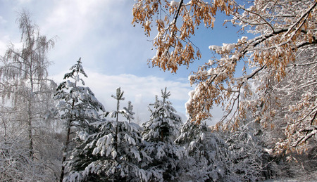 The Winters Tale. Fairy-tale, incredibly beautiful snowy forest