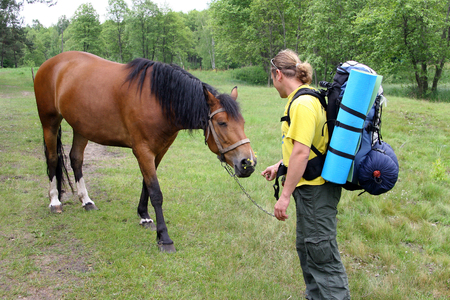 sleeping pad: Young tourist with a backpack acquainted with the horse and the horse gives a flower