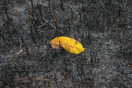 portent: One yellow leaf survived after a forest fire. Not like everyone else.They stand out from the crowd. Stock Photo