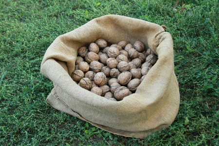 linen bag: Autumn harvest. A linen bag with nuts stands on the grass