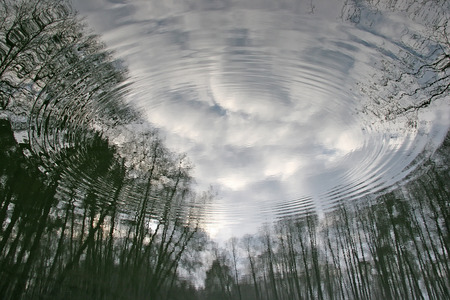 disperse: Followed disperse the water in which the visible reflection of the trees, the coastal forest. The causal relationship are rings in the water Stock Photo