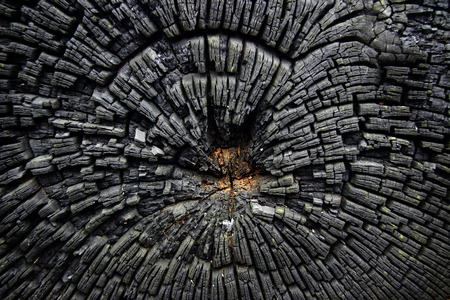 charred: Burned and charred cut down a tree with a heart untouched by fire