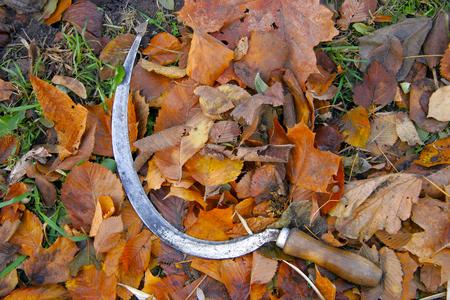Hammer lying on yellow autumn leaves. Autumn harvest Stock Photo