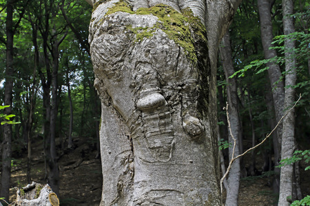 The magic tree in the autumn forest. Tree with eyes.