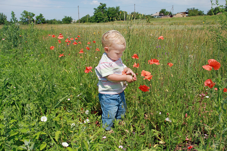 Little white kid in jeans touching red poppy on a sunny meadow overgrown with flowers