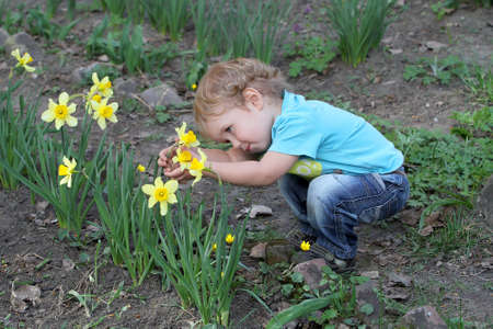 The little white child carefully considering narcissus flower in the backyard of the house. The boy looks at a flower growing without breaking it.
