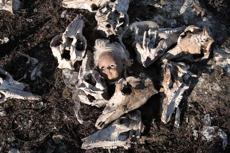 The doll's head is surrounded by pig skulls
