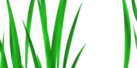 gramineas: Hierbas