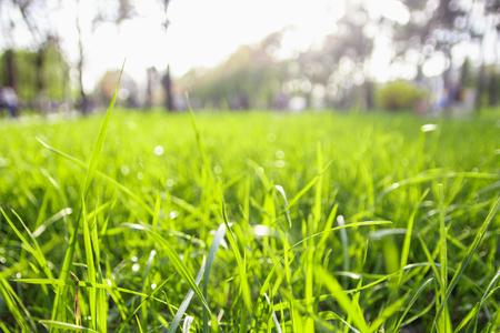 green summer grass nature, beautiful background macro