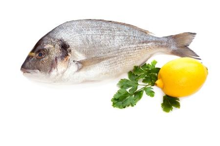 Dorado fish on white background  Stock Photo - 17332382