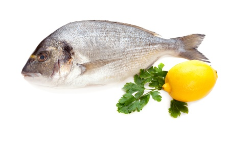 Dorado fish on white background Stock Photo - 17332382