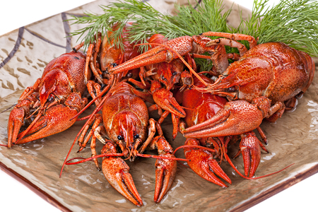Boiled  crayfish with dill  on the plate. Close up. Imagens - 77308476