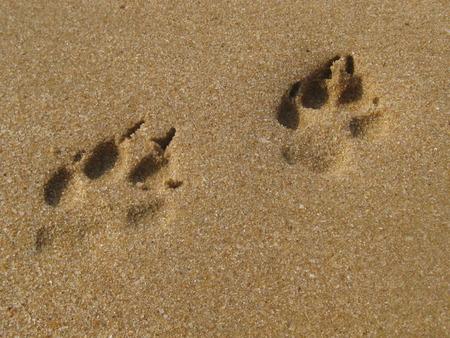 huellas de perro: Huellas de perro en la arena