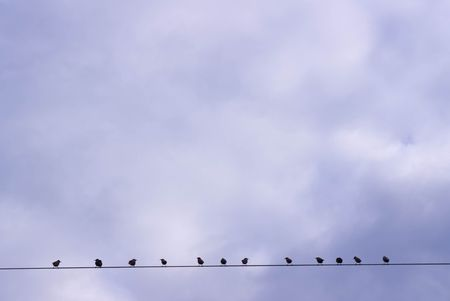 Birds sitting on a wire against the sky Stock Photo - 8143183
