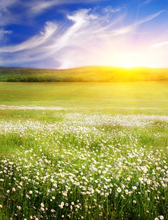 Big field of flowers on sunrise. Composition of nature.
