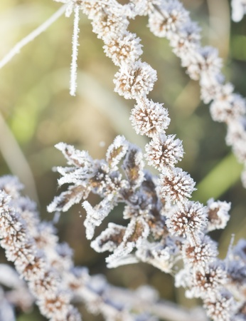 very cold: Frozen plants on very cold and sunny day in winter