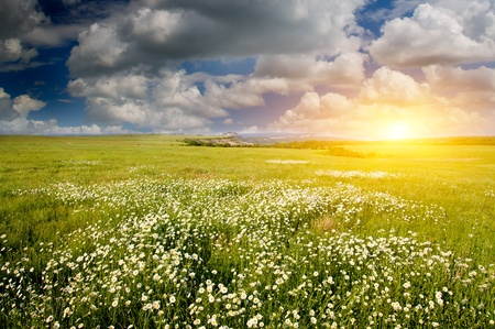 Big field of flowers on sunrise. Composition of nature. photo