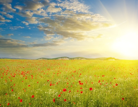 Green meadow on the sunset. Composition of nature.