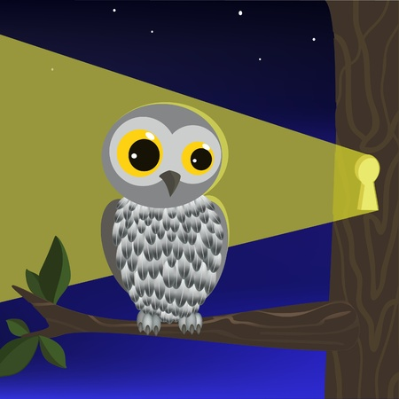 Owl on the branch. In the night forest. photo