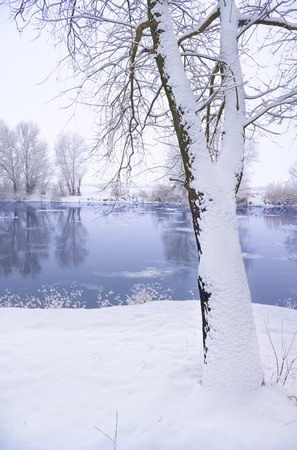 frozen lake: frozen river and trees in winter season