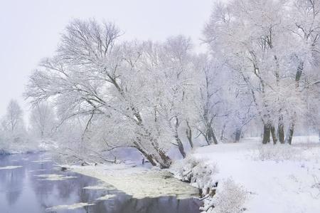 frozen lake: bevroren rivier en de bomen in de winter het seizoen