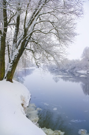 frozen river and trees in winter season photo