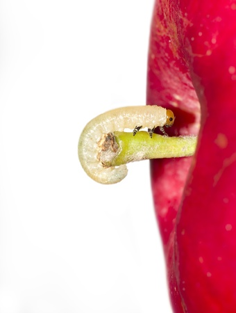 worm move on surface of red apple photo
