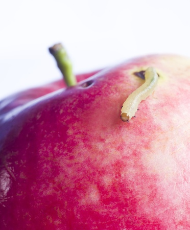 grub: worm move on surface of red apple