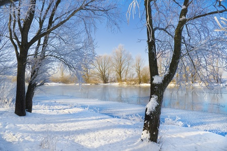flurry: frozen river and trees in winter season
