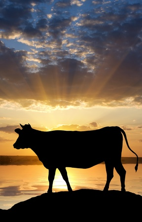 Silhouette of a cow situated on the bank of the river on a decline Stock Photo