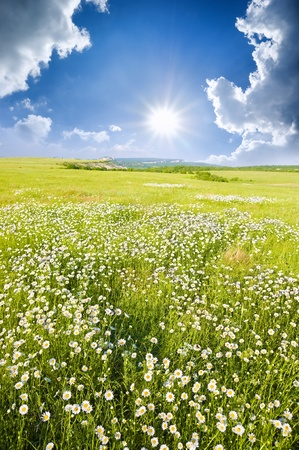 Big field of flowers on sunrise  Composition of nature  photo