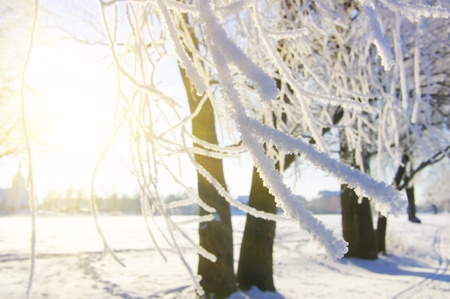 View into winter forest after snow storm Stock Photo - 13264305