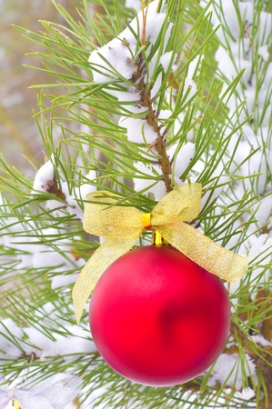 Christmas toy on brunch of pine tree photo