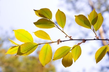 Branch of a tree against autumn wood Stock Photo - 13614524