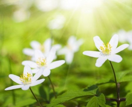 white flowers in forest  Nature composition