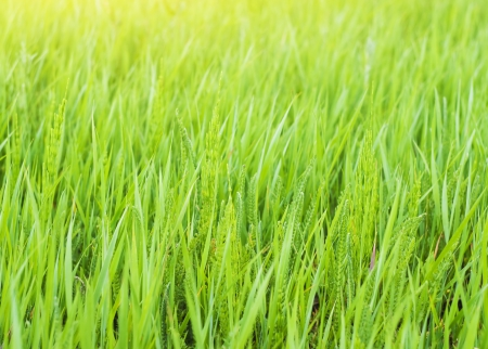 green spring and summer grass closeup Stock Photo - 13995723