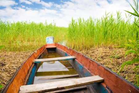 green boat: Green boat in a high cane on the bank of lake