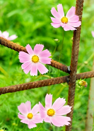 urbanistic: Pink flowers and urbanistic architecture Conceptual registration